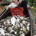 Cá chết hàng loạt tại thượng nguồn sông Sài Gòn